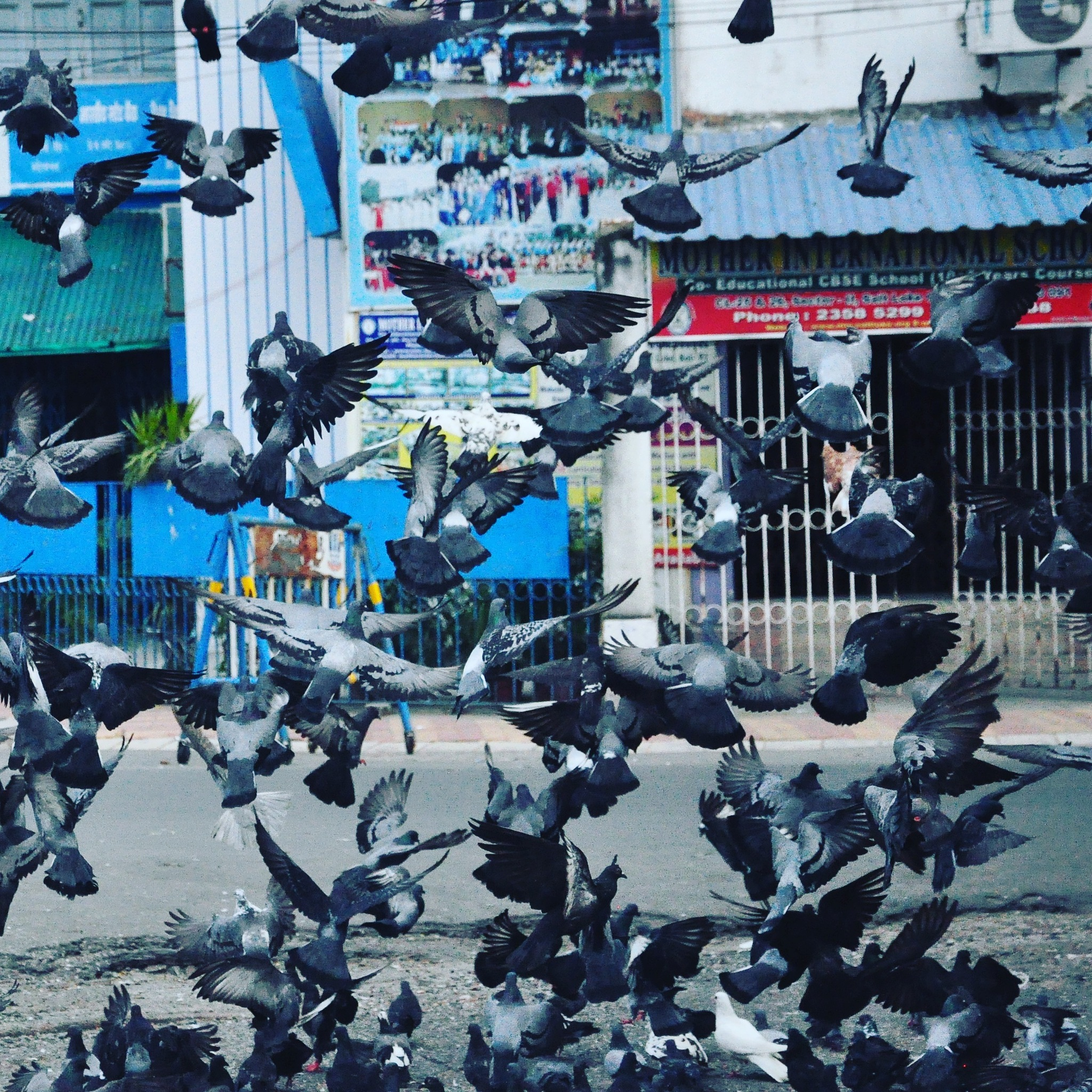 freedom by anik basu bhaumik