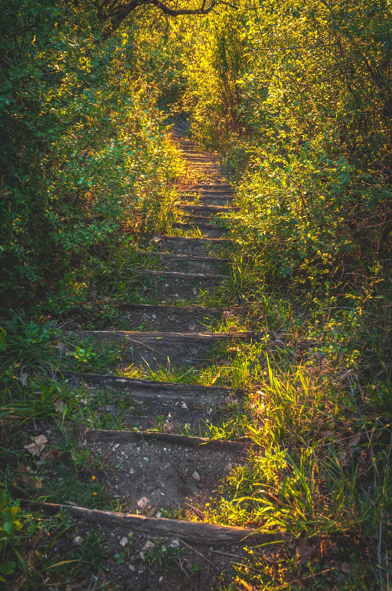 Stairs to heaven  by Gabor Gergely