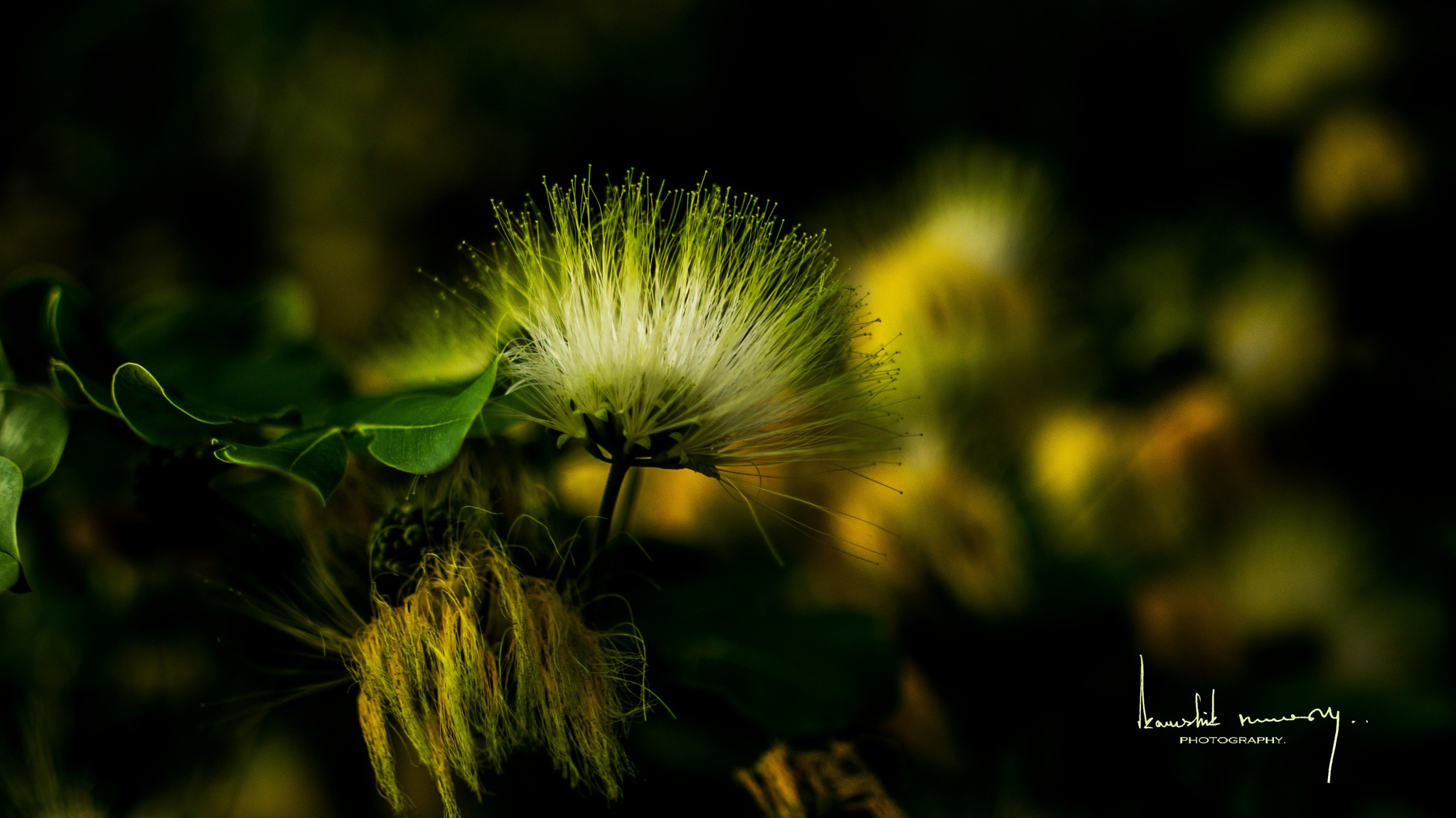 Green Flower Zoomed up by Kaushik Nandy