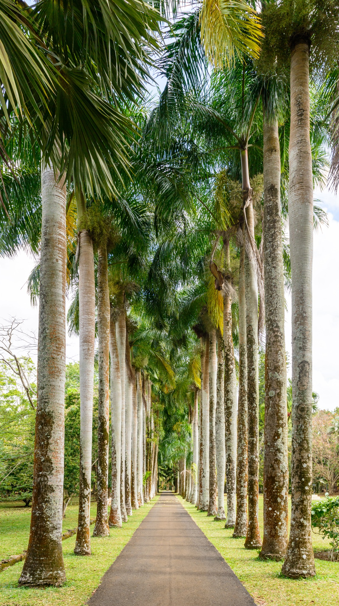 Royal Palms by Marcel Weichert