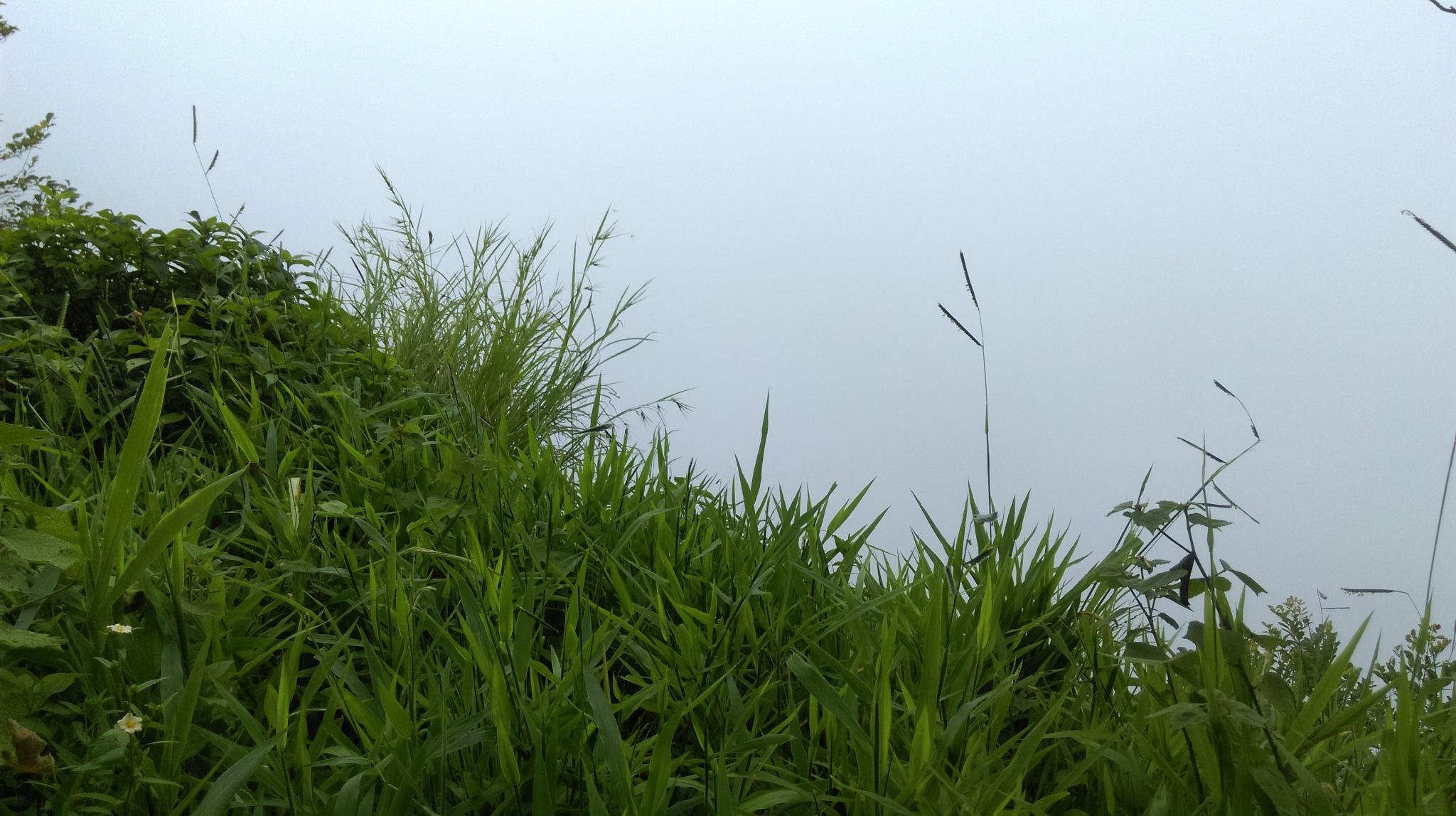 Grass by Gokul Wunderbar