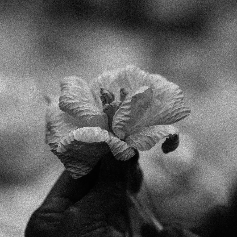 Untitled by w.patipan
