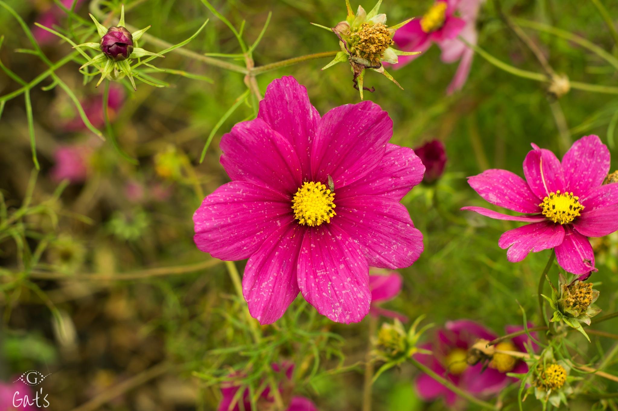 Fleur d'automne by Gats BXL