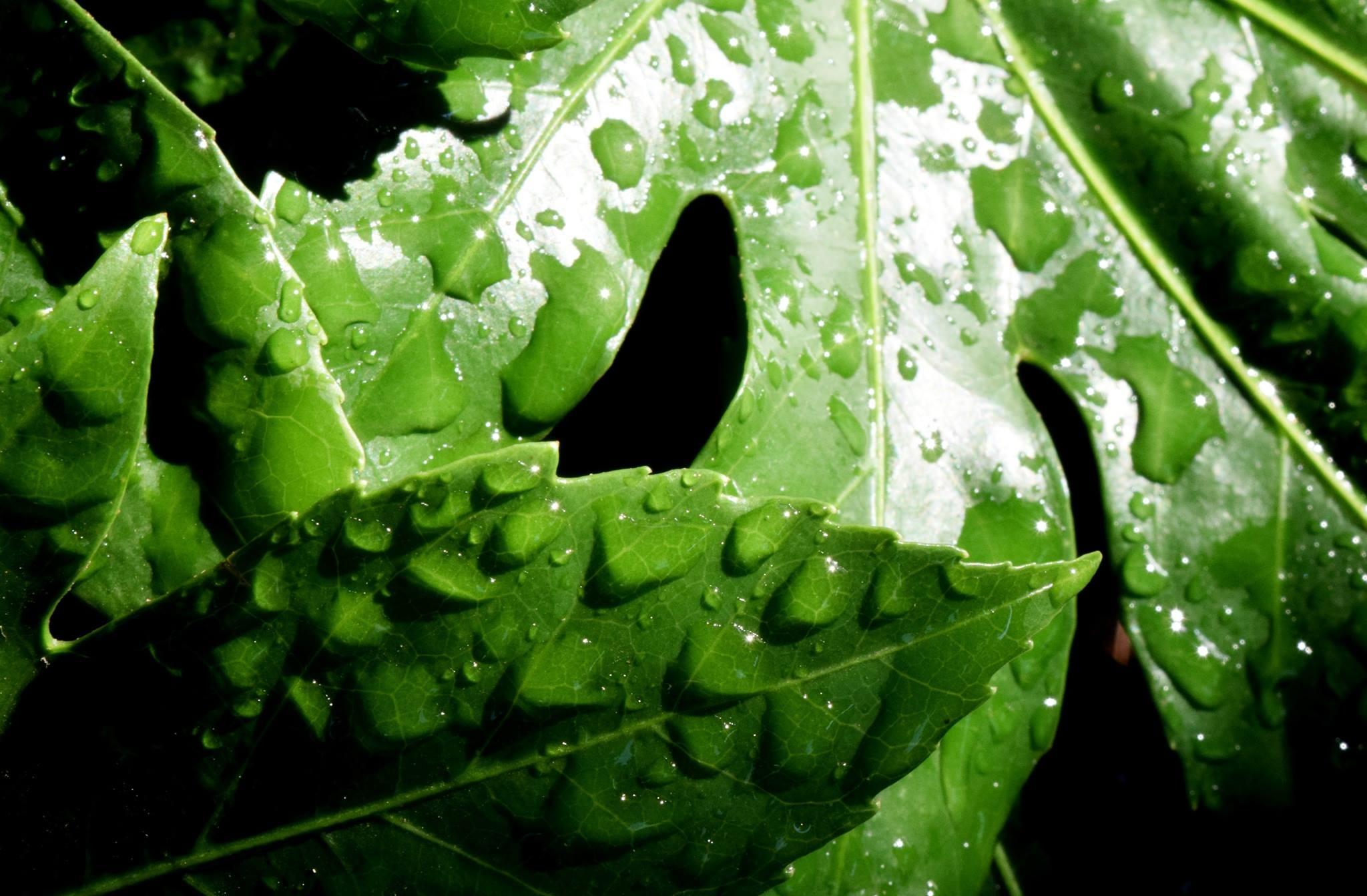 Tropical Rain by Frank Dunford