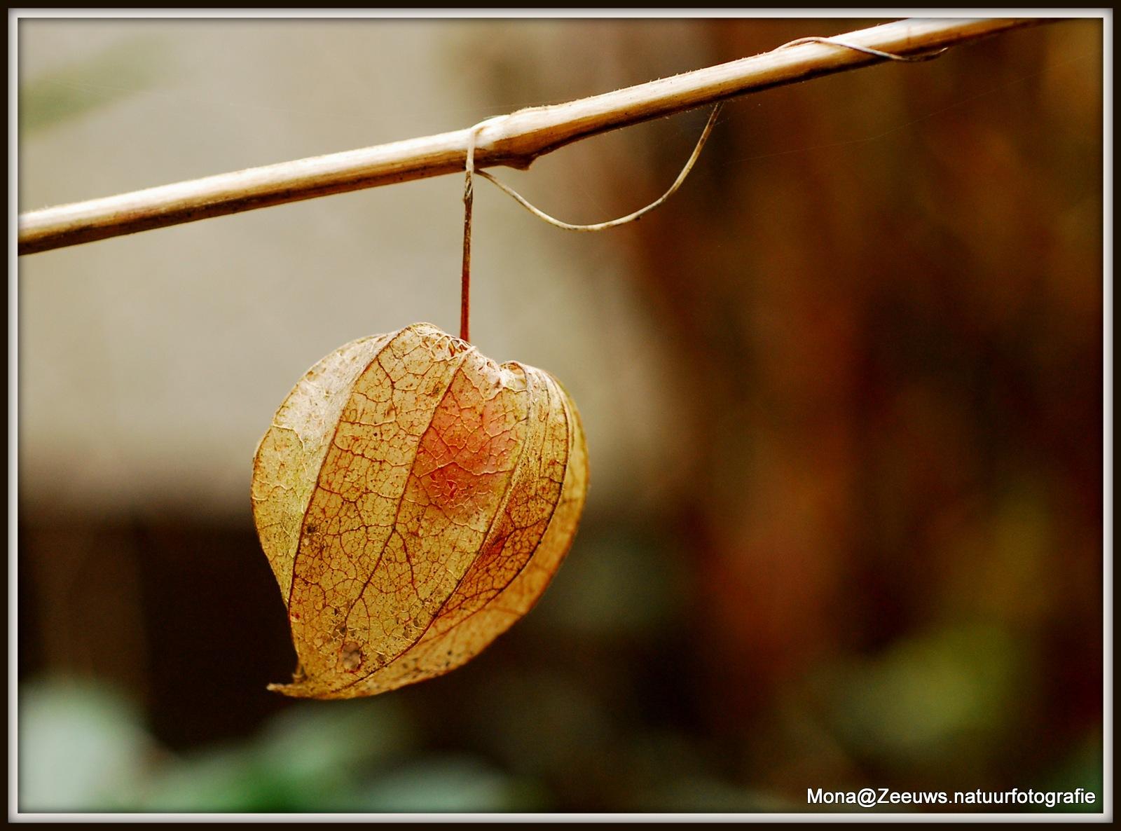Leaf of a tree by Simone Zeeuws