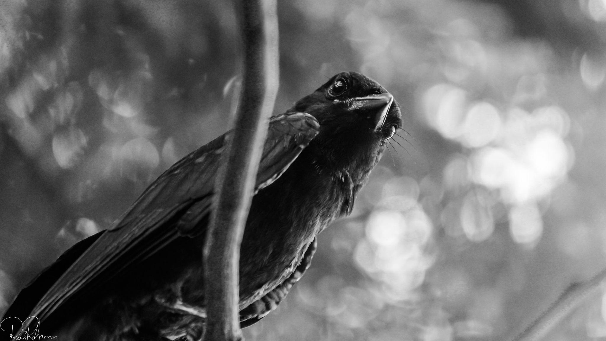 black and white dreams by Raian Rahman Zim