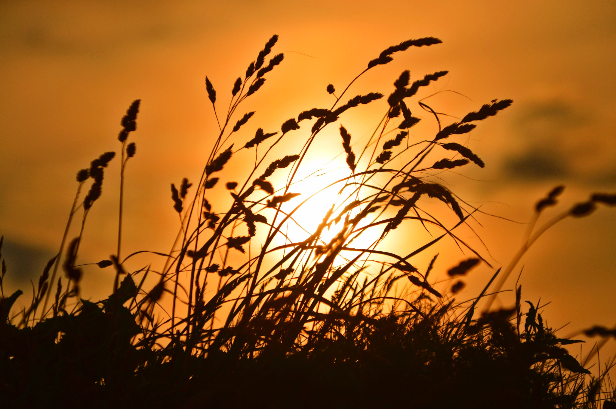 Sunset through the grass by Deryk Durrant