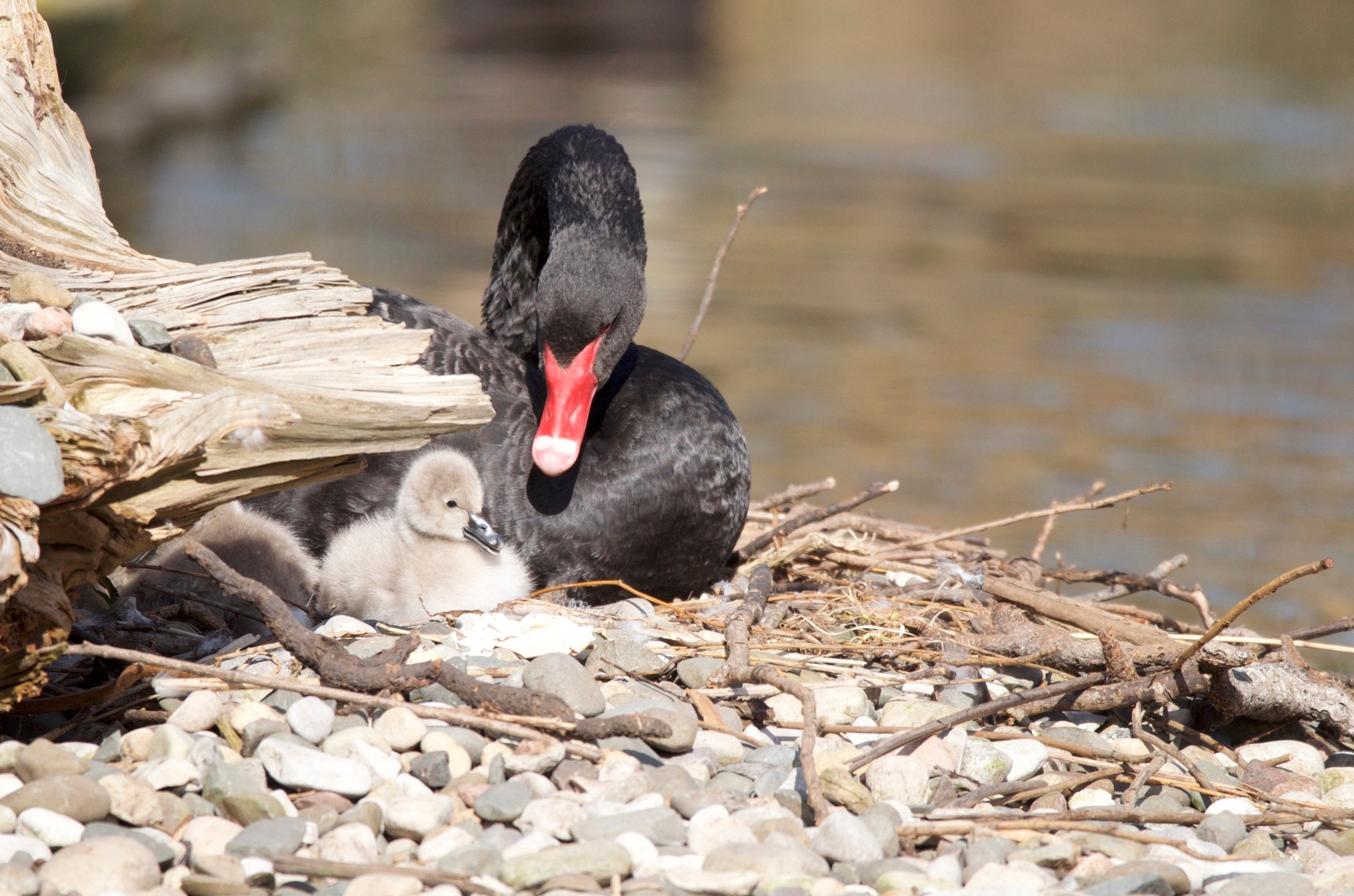 proud mother by richard