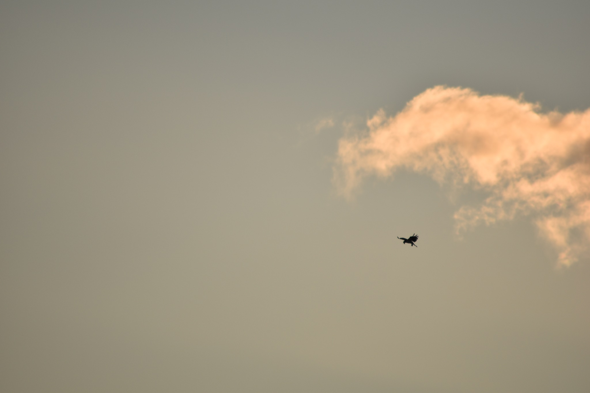 Cloud chasing bird by elevatedphotographymedia