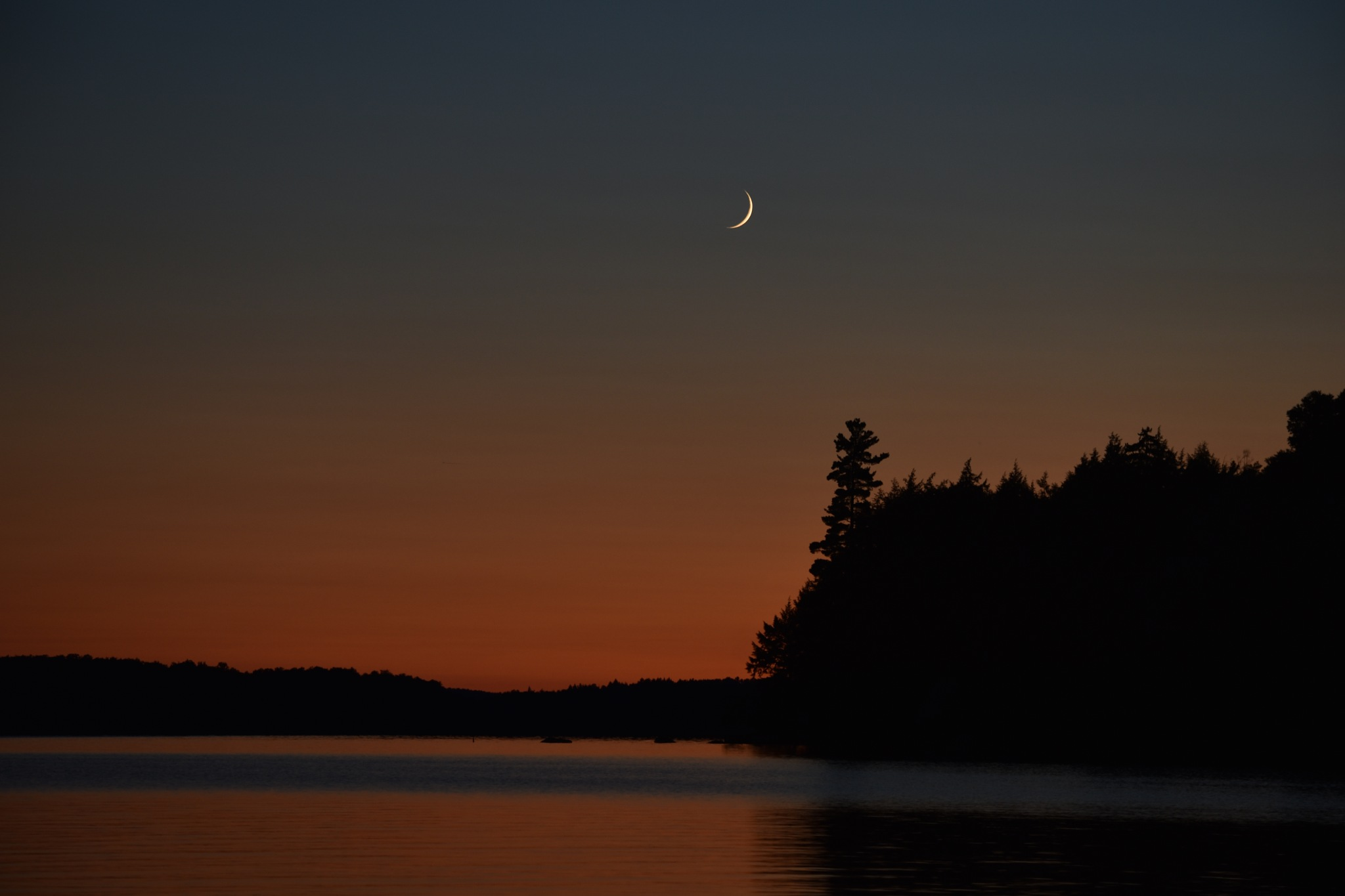 White pine and Crescent Moon by elevatedphotographymedia