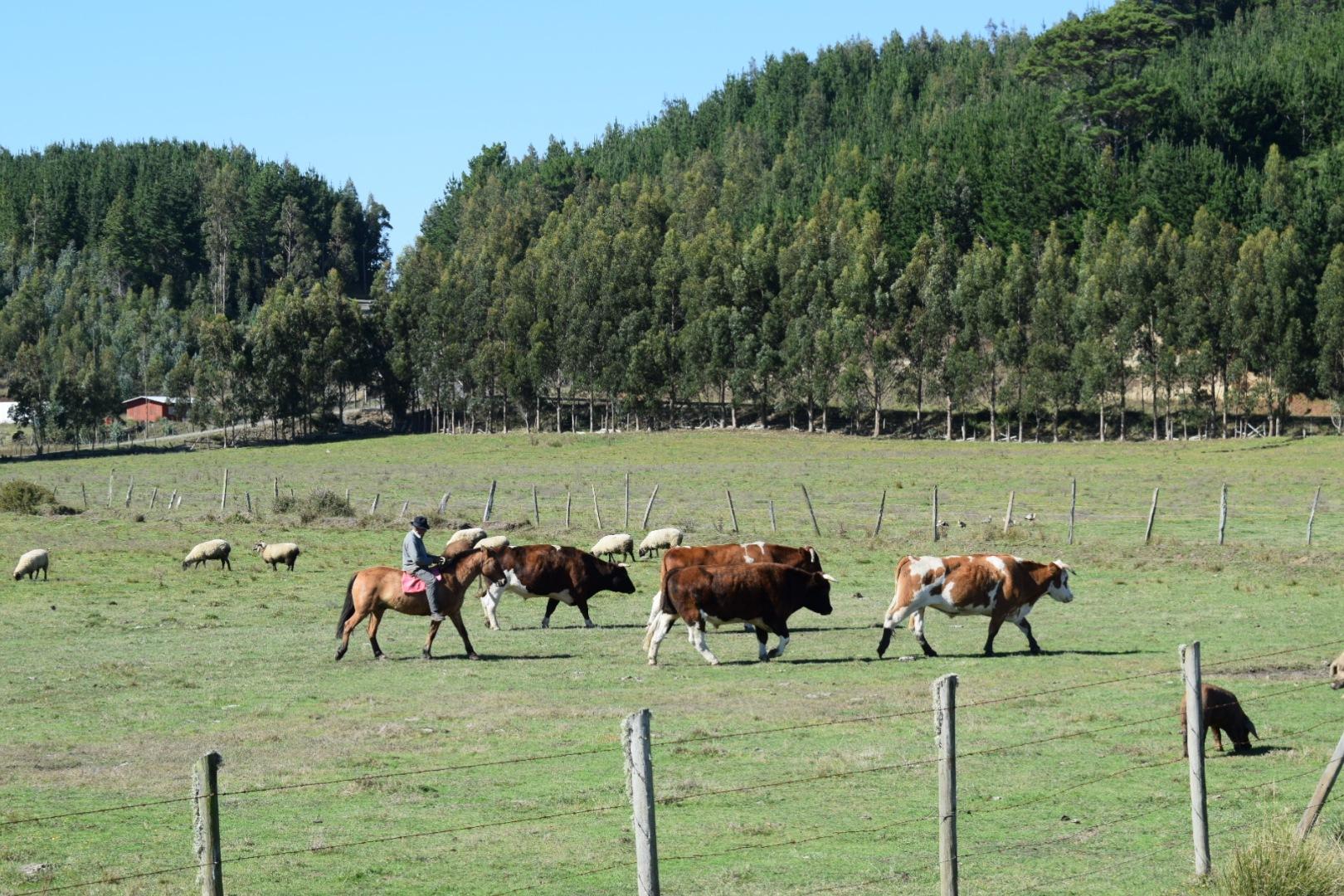 (0006) En Nehuentúe, IX Región de La Araucanía, Chile  by Patricio Cabezas