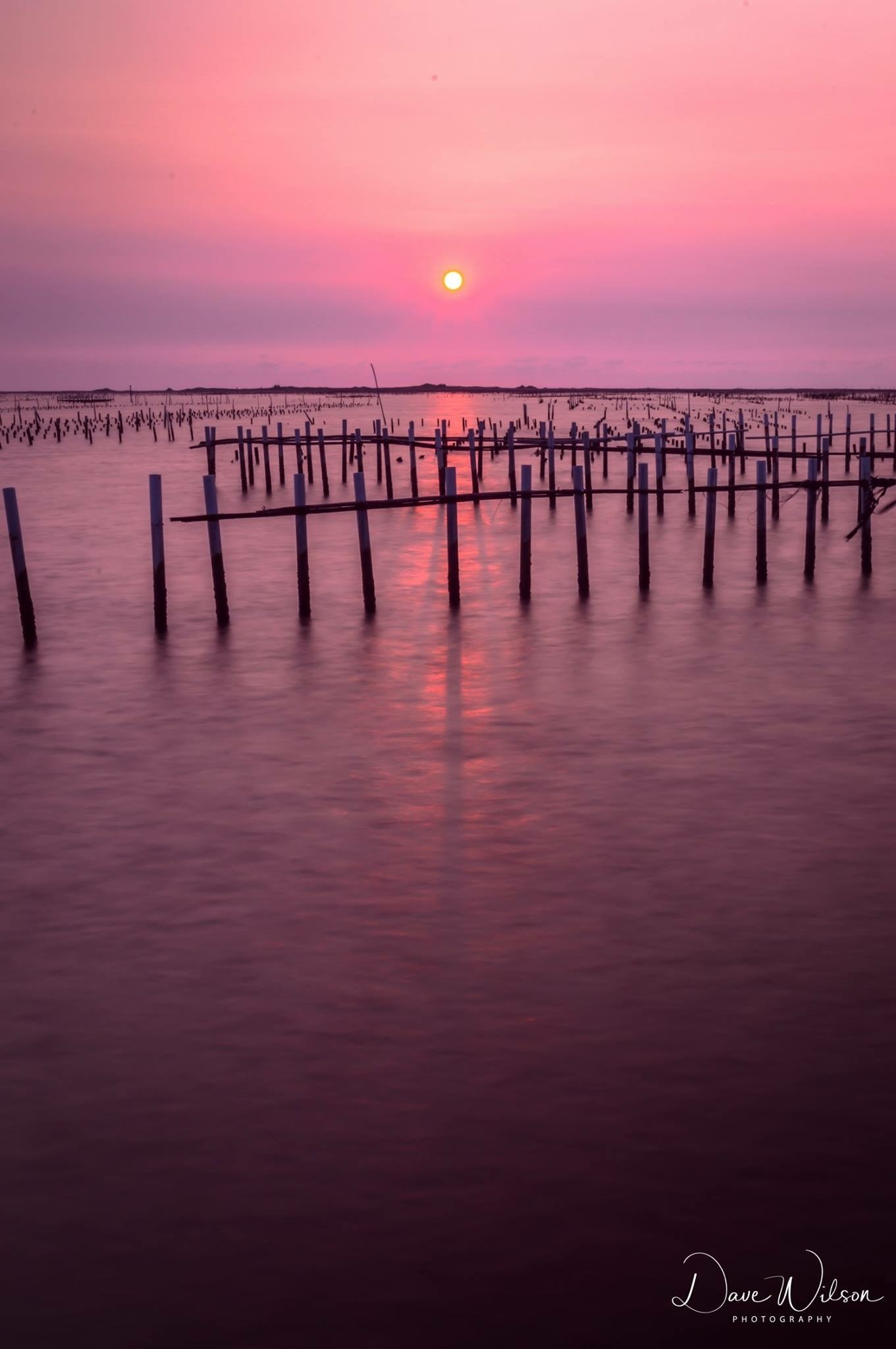 Oyster Sunset 2 by Dave Wilson