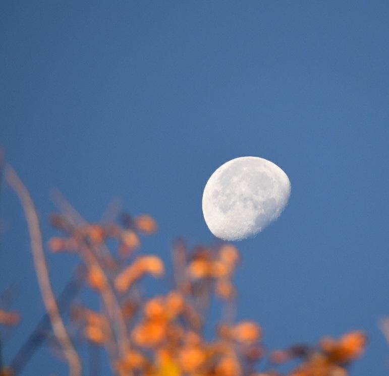 Morning Moonrise by Rain Shine Mochi