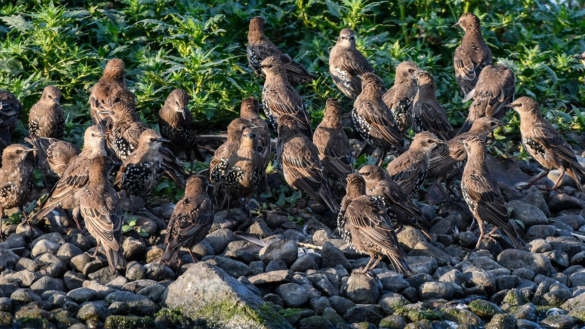 Crowded by Ake Hansson