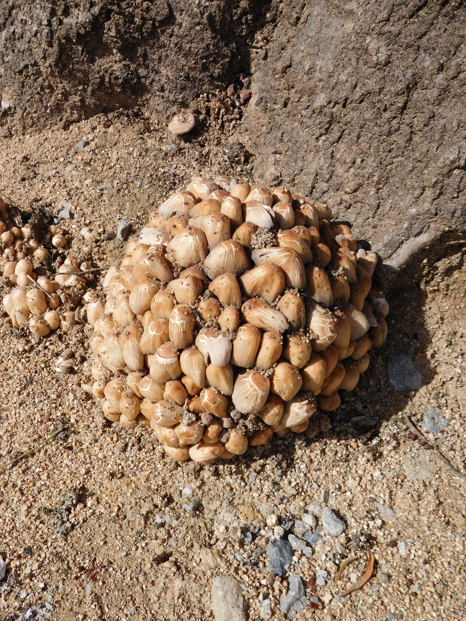 Ball of mushrooms by Luso