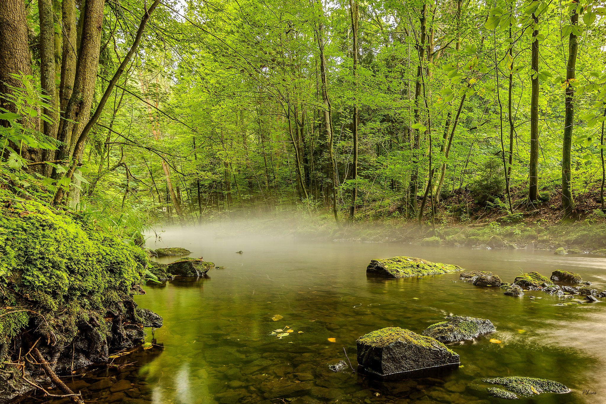 Foggy River  by Peter Lie