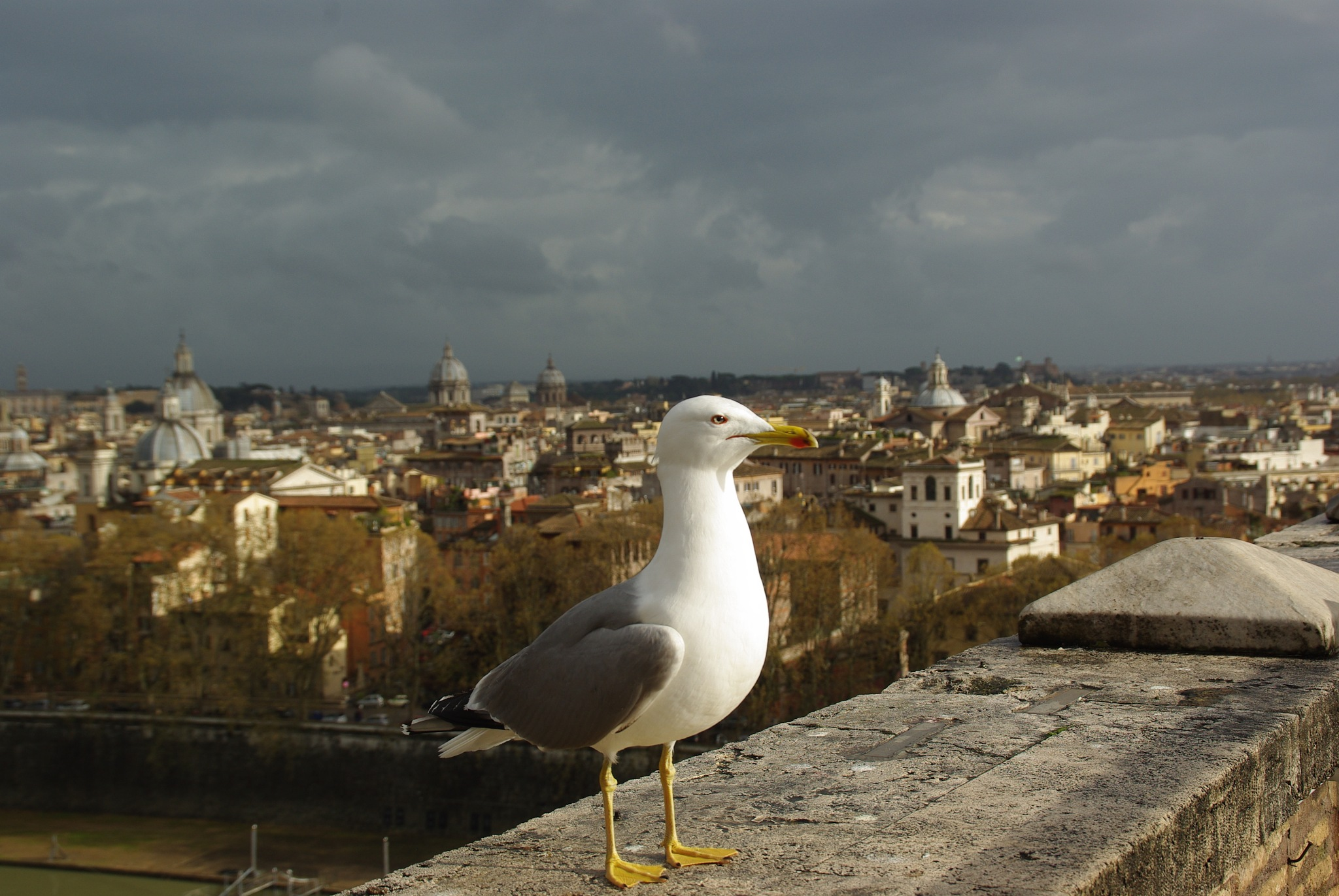 Roma Heads by Carlos Palleres Solis