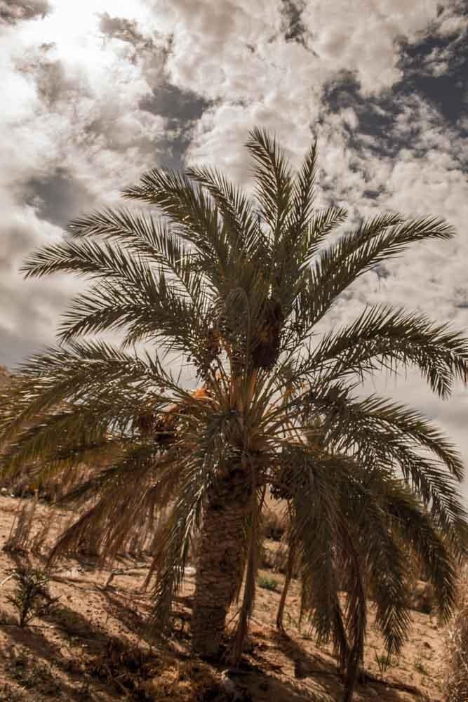 حياتنا مثلا الشجرة  by Mehdi Khalikha