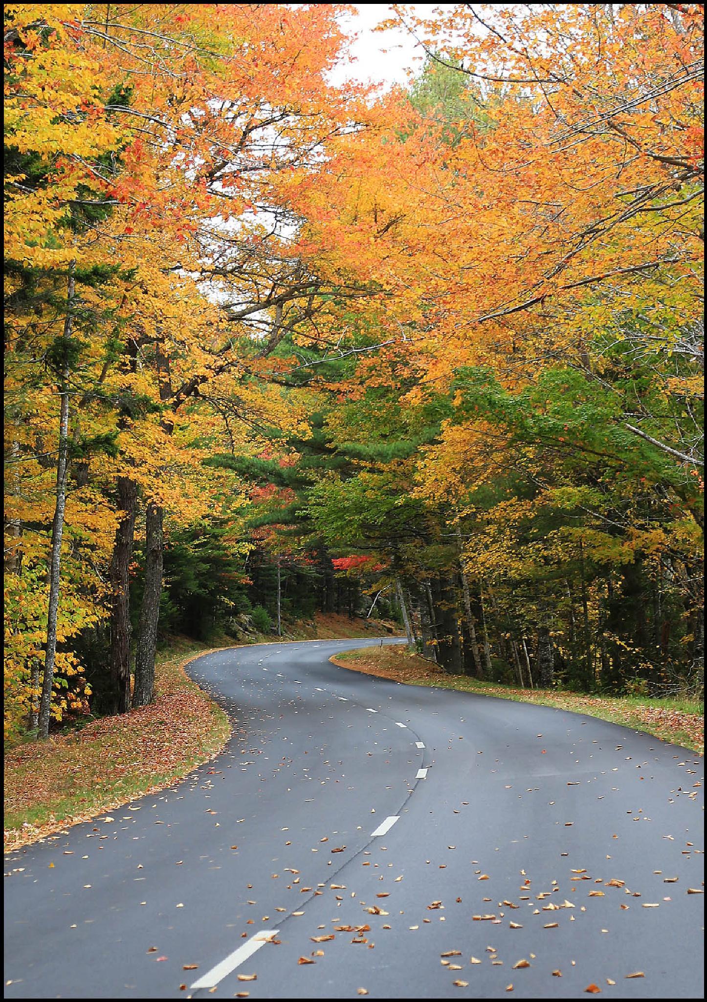 Country Road by Linda Ruiz