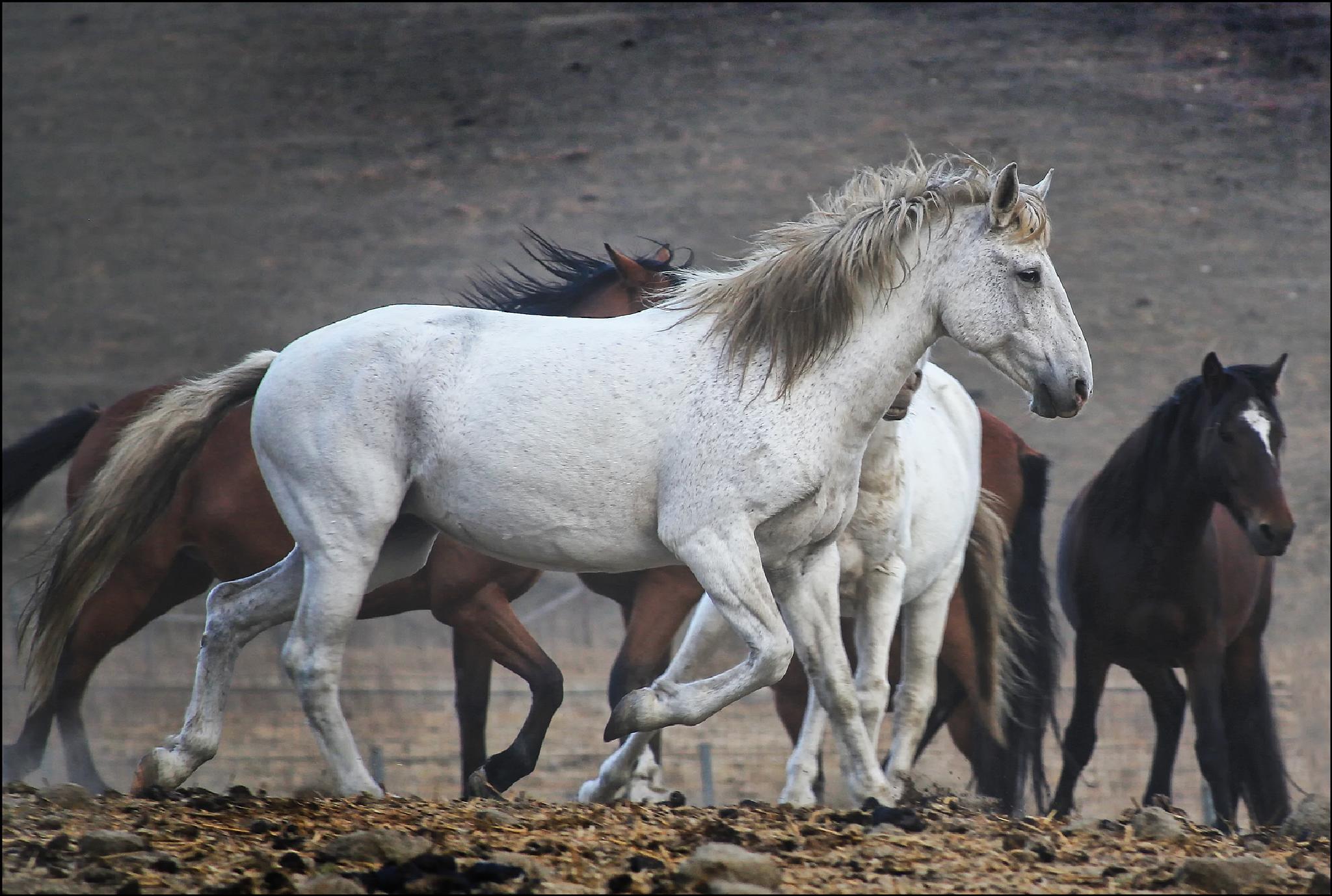 The Herd by Linda Ruiz