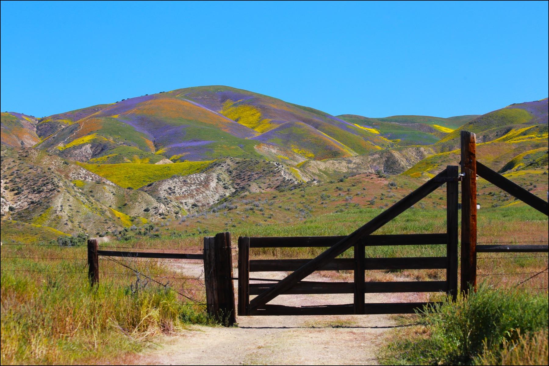 Gateway to beauty by Linda Ruiz