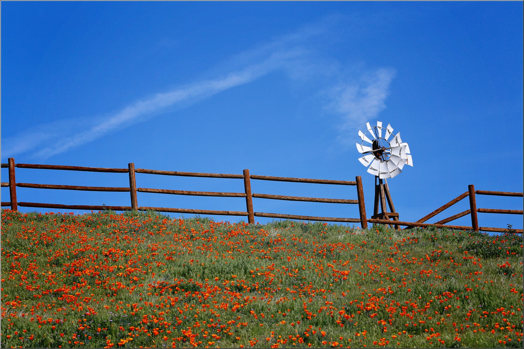 Windmill and Poppies by Linda Ruiz