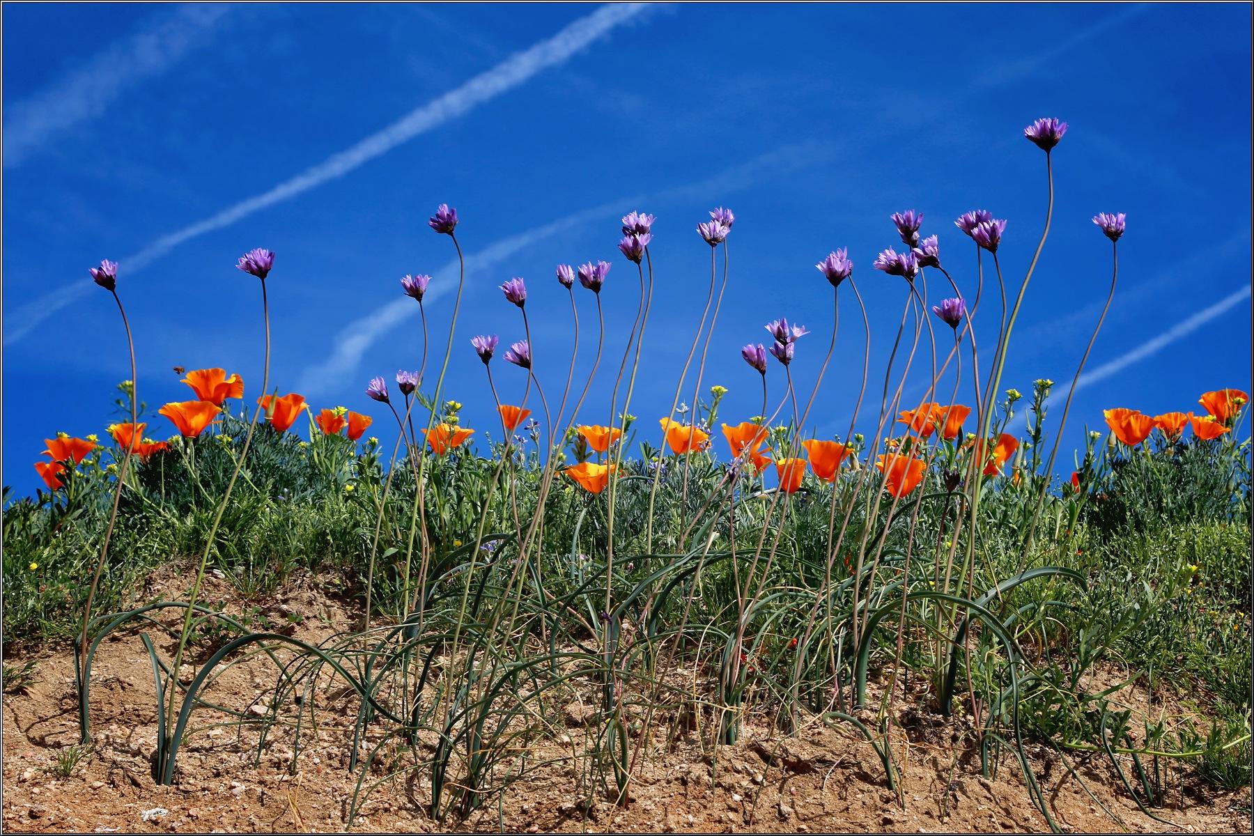 Wildflowers by Linda Ruiz