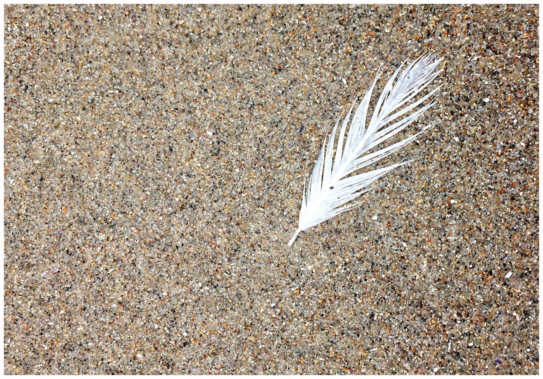 Feather by Linda Ruiz