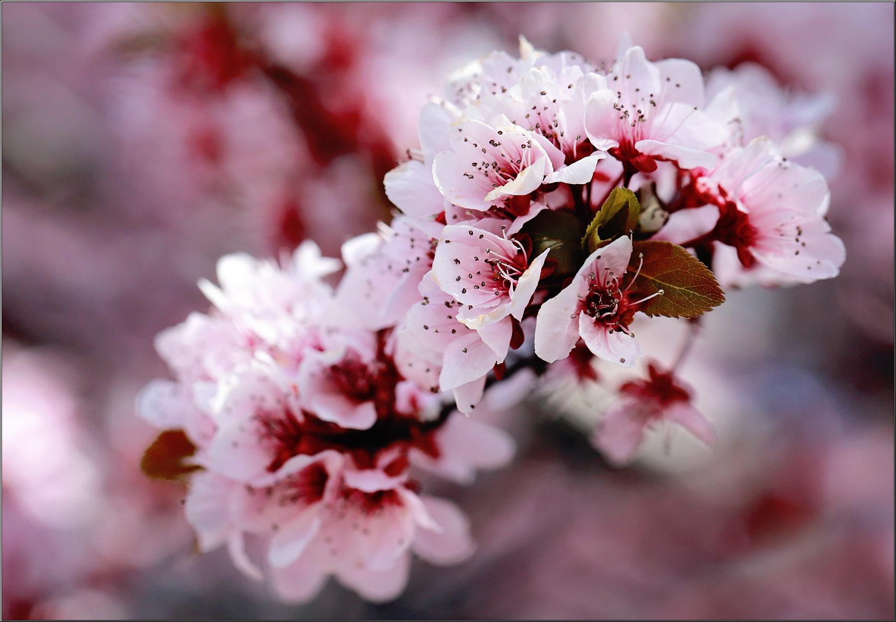 Sign of Spring by Linda Ruiz