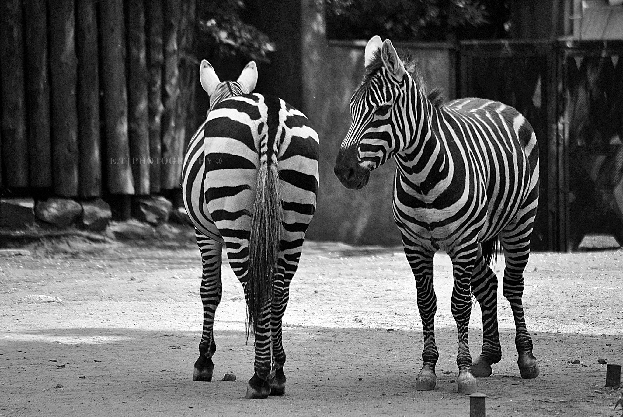 Black and White by Elzo Thunderstorm