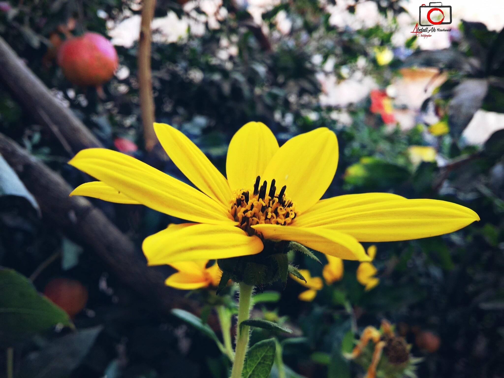 #flower by ABDULLAH RASHEED
