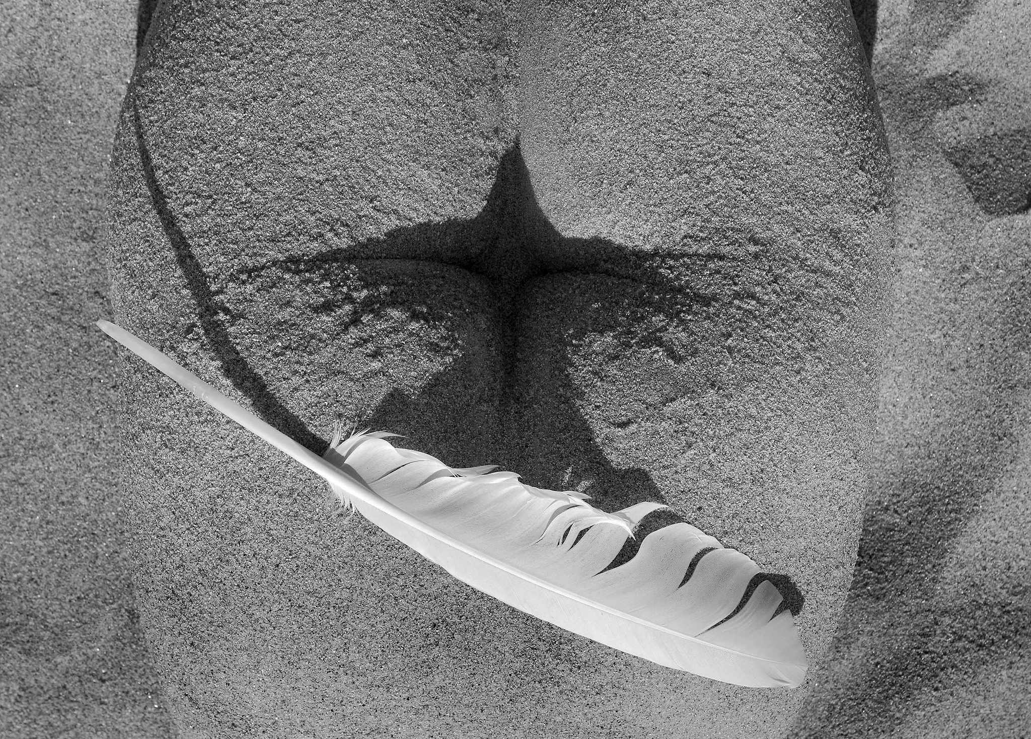 Bird. by Arnis Krumins
