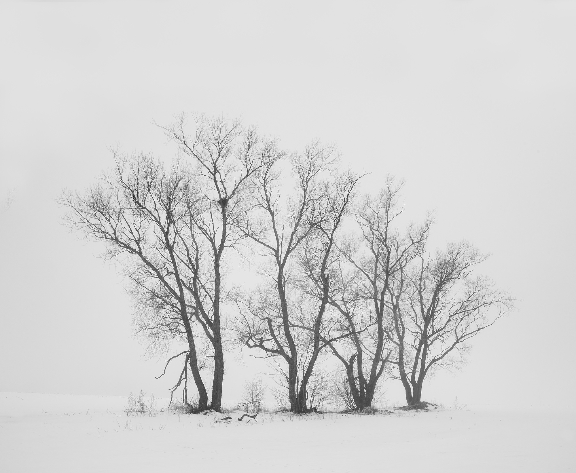 Crow's nest by Arnis Krumins