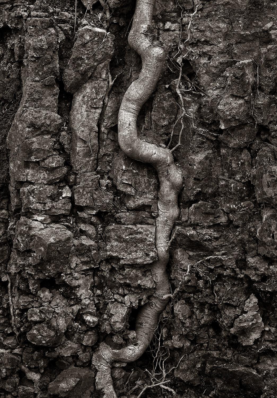 upwards by Arnis Krumins