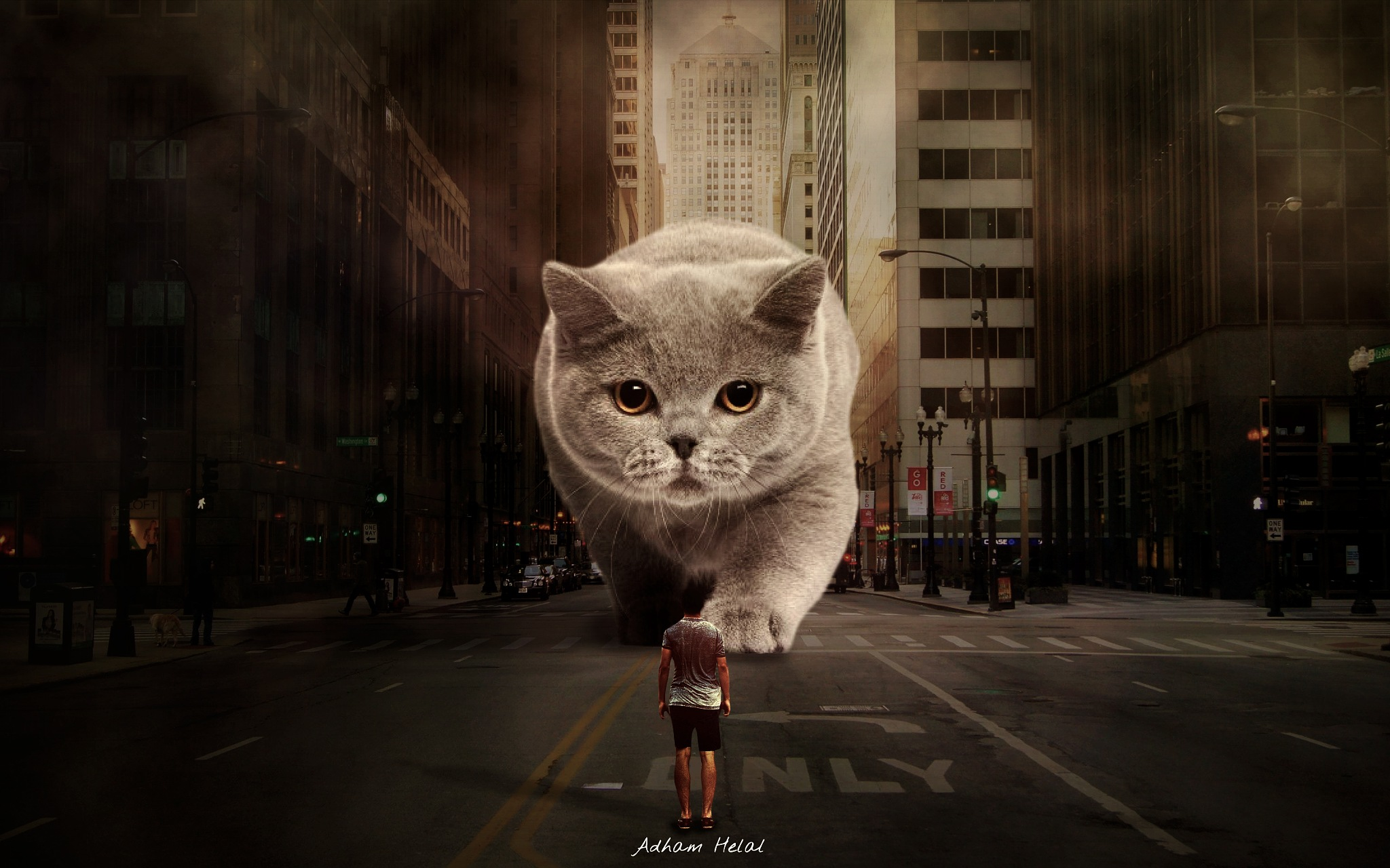awesome cat by Adham Helal