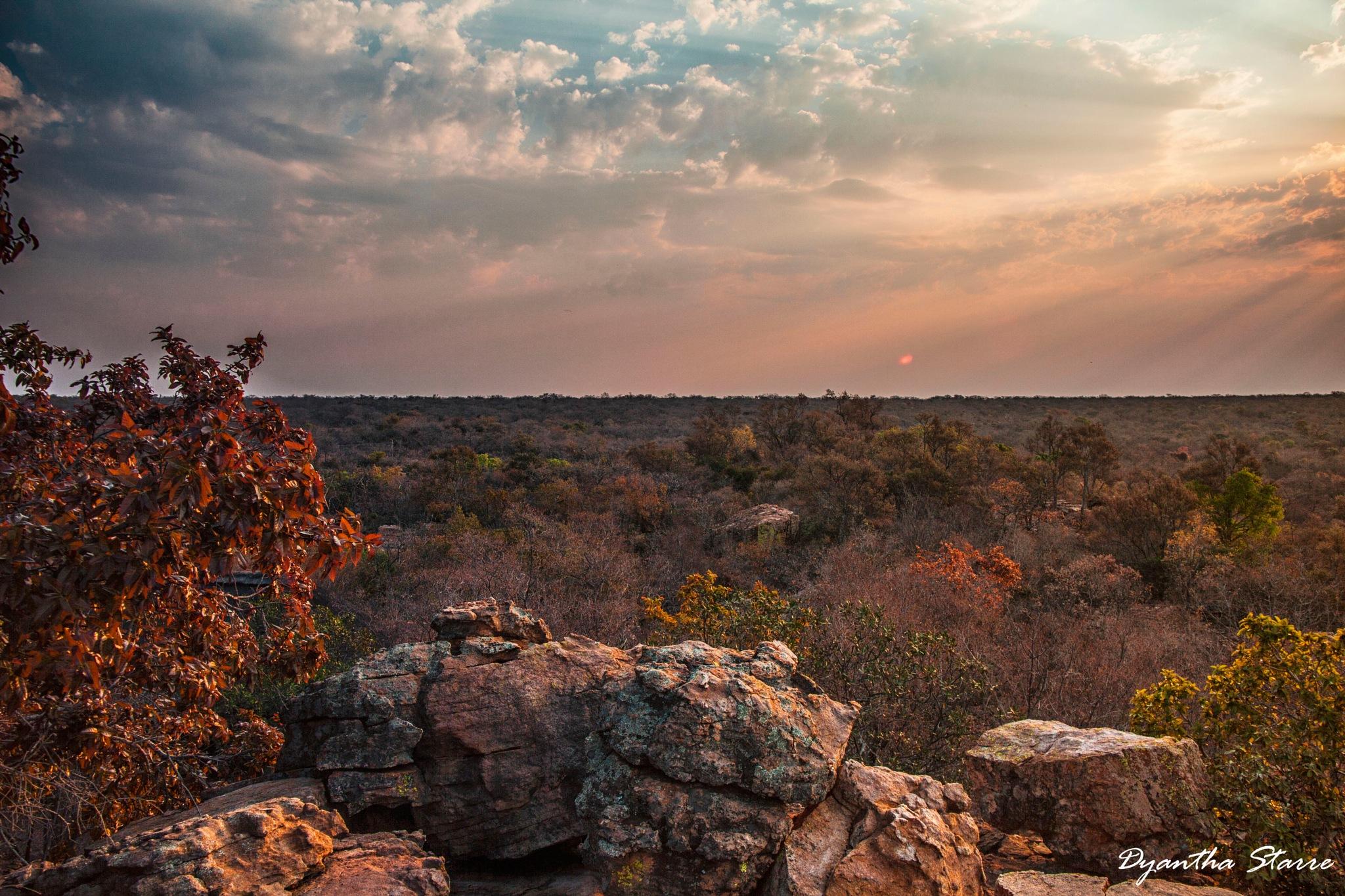 African landscape by Dyantha Starre