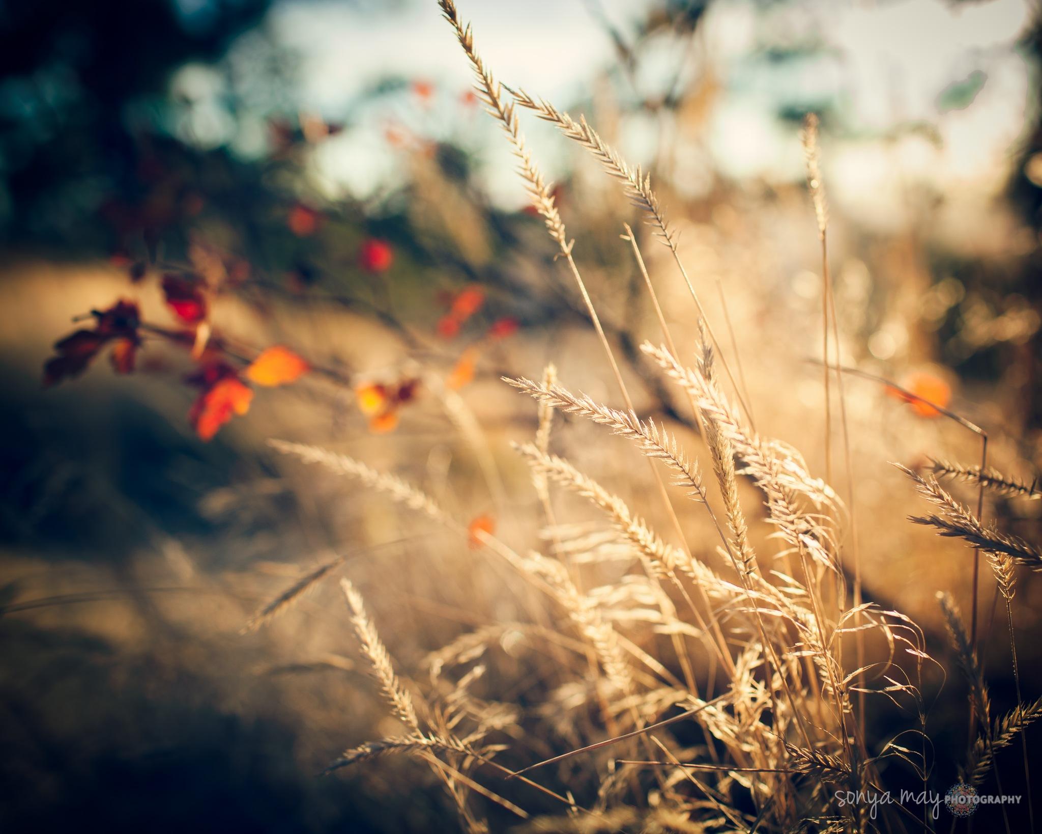 October  by Sonya Hensley