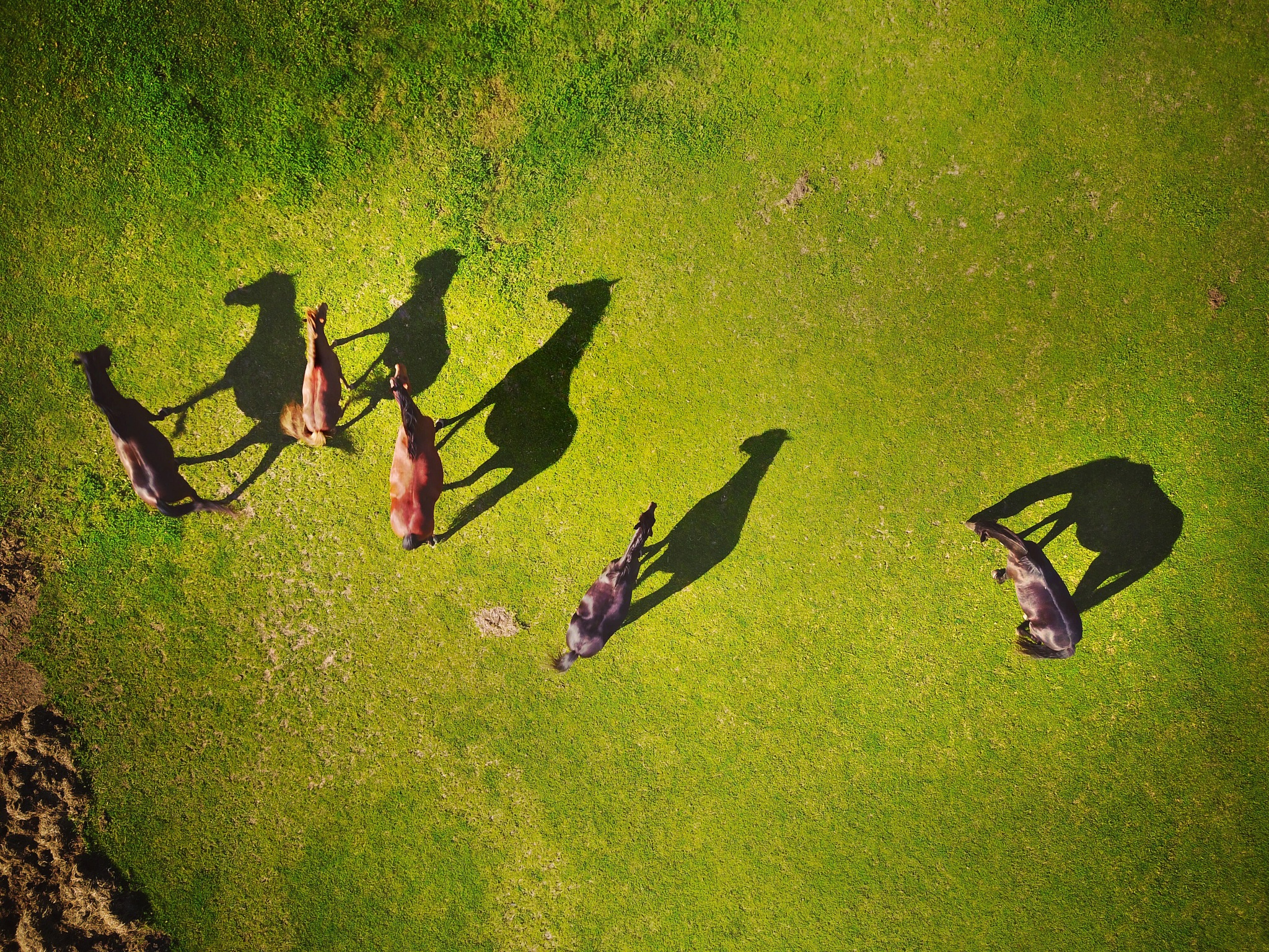 Horse Shadows by Bruce Christianson