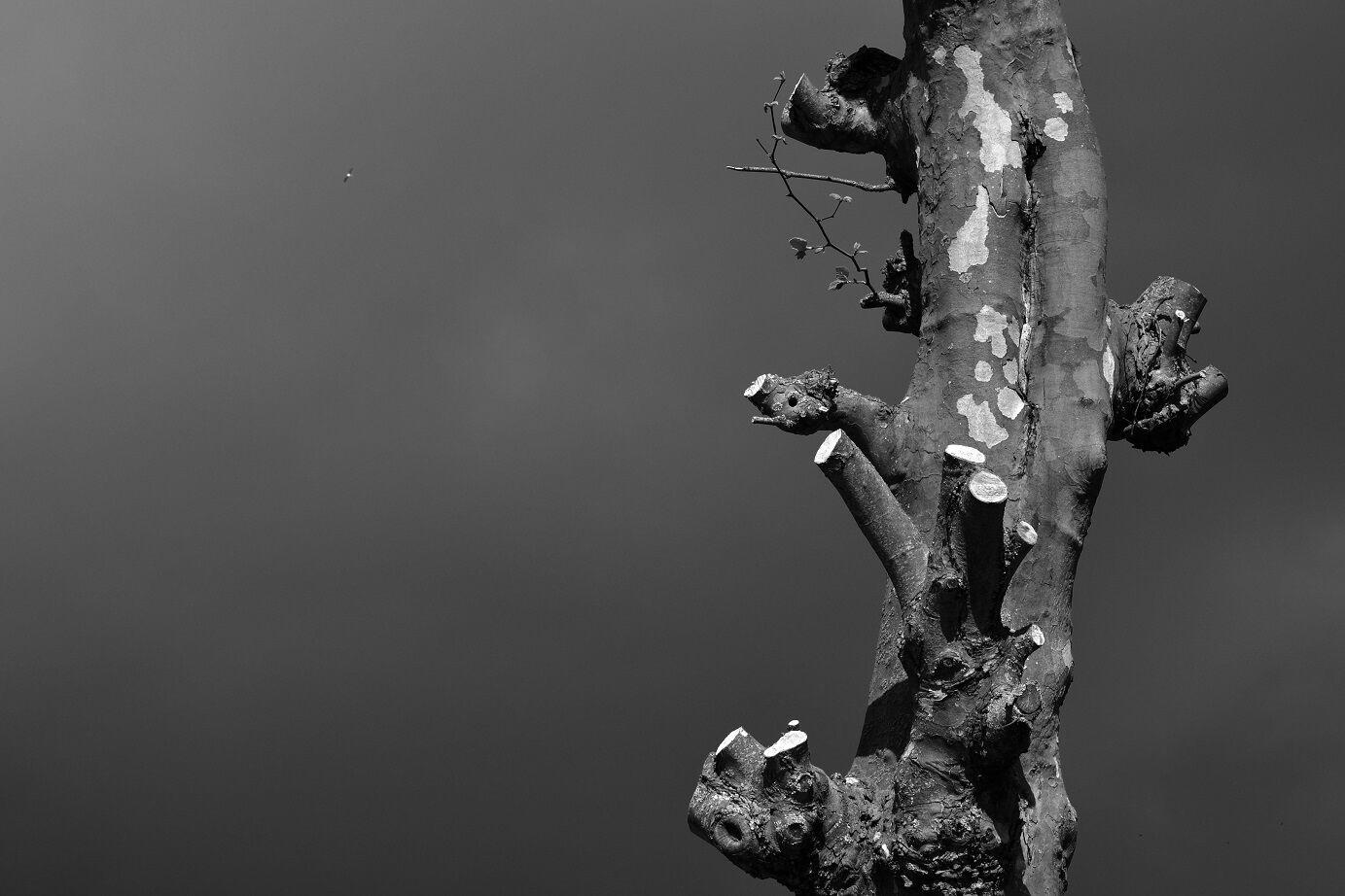 Dark sky by Willemijn Wahl