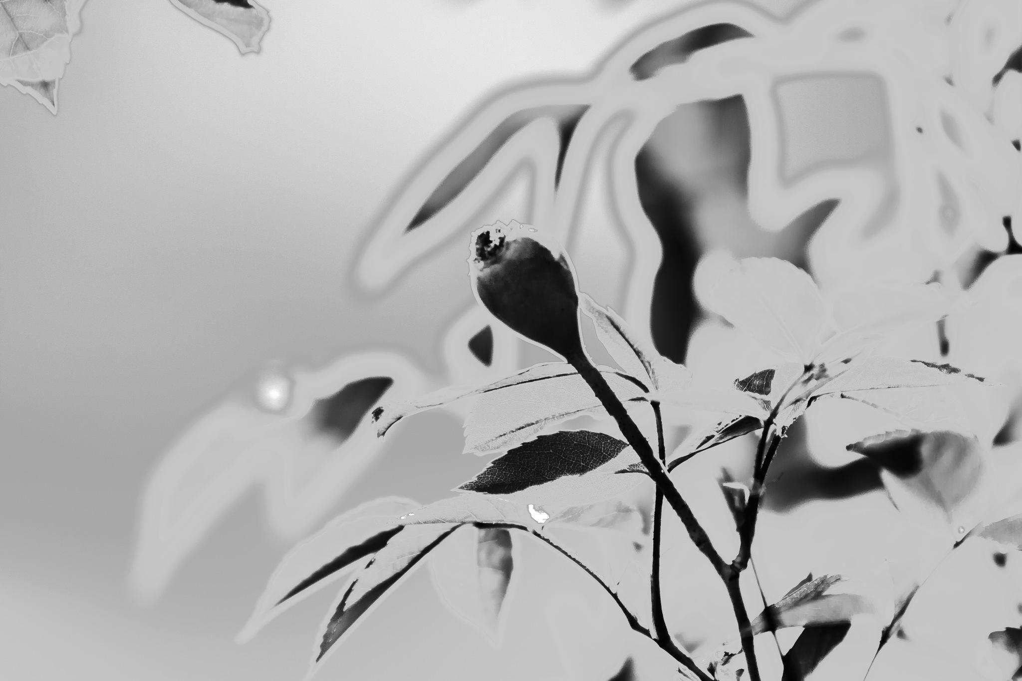 Poppy by Martyn
