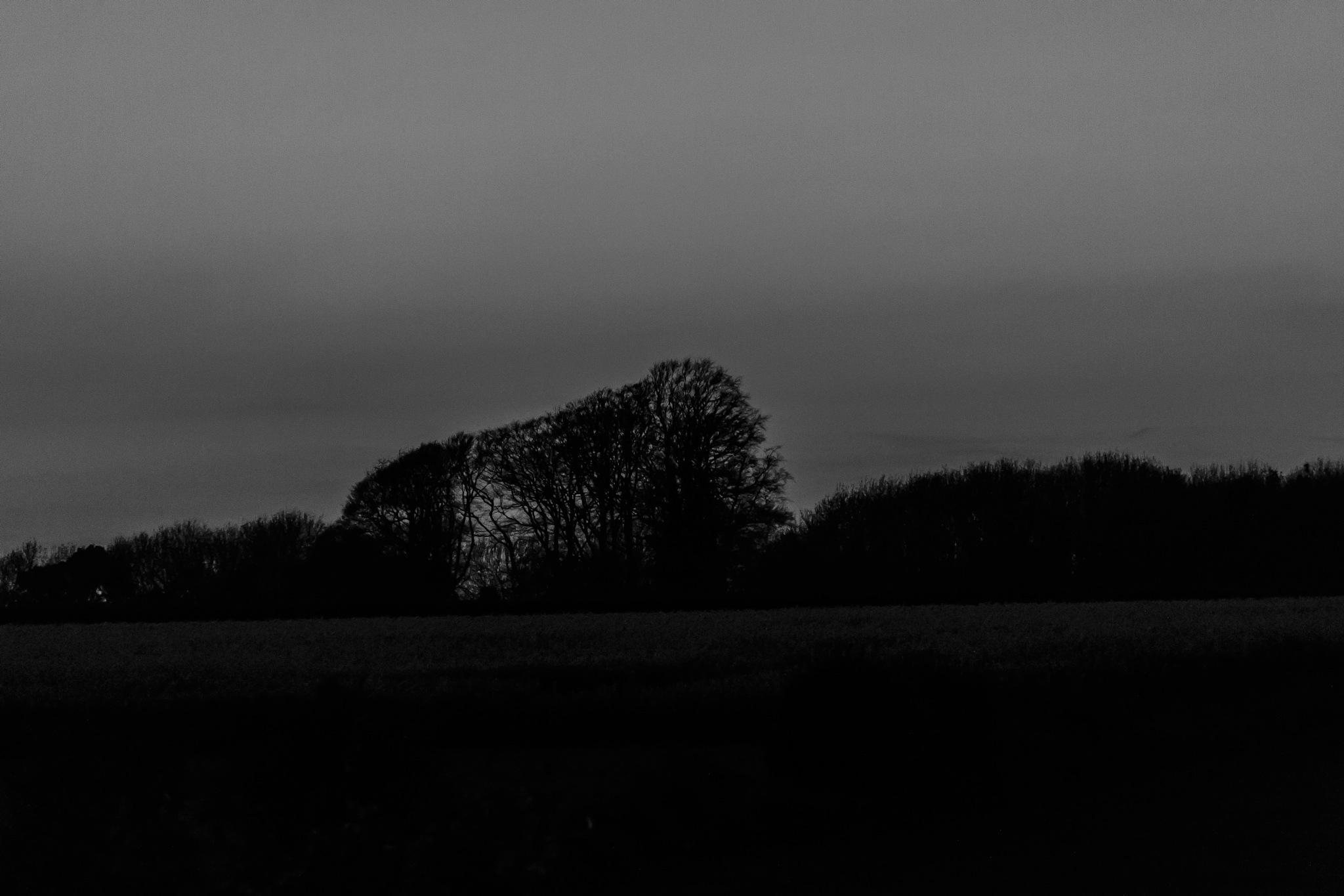 Night Sky 1 by Martyn