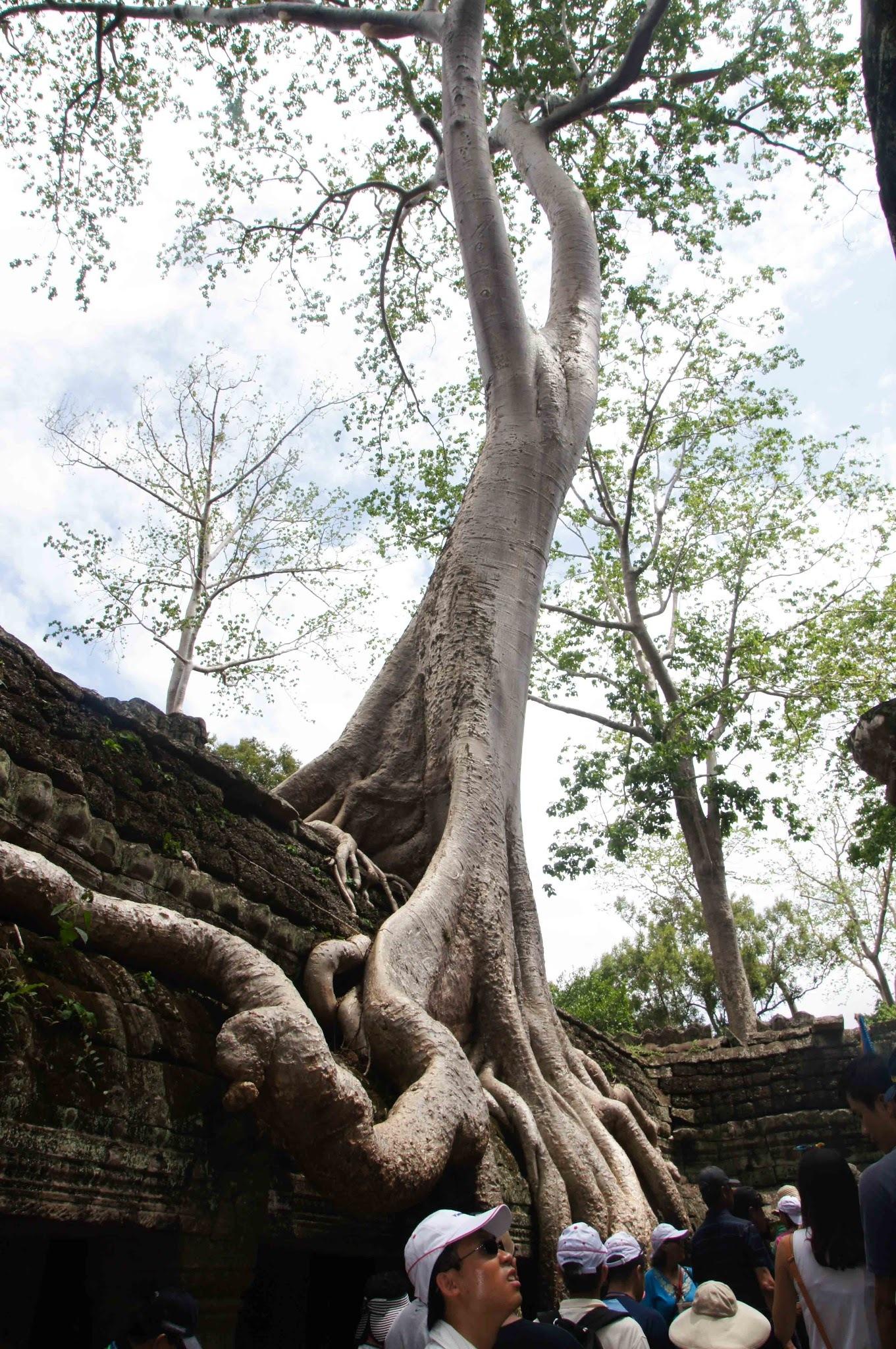 Ta Prohm Siem Riep Cambodia by quan0709
