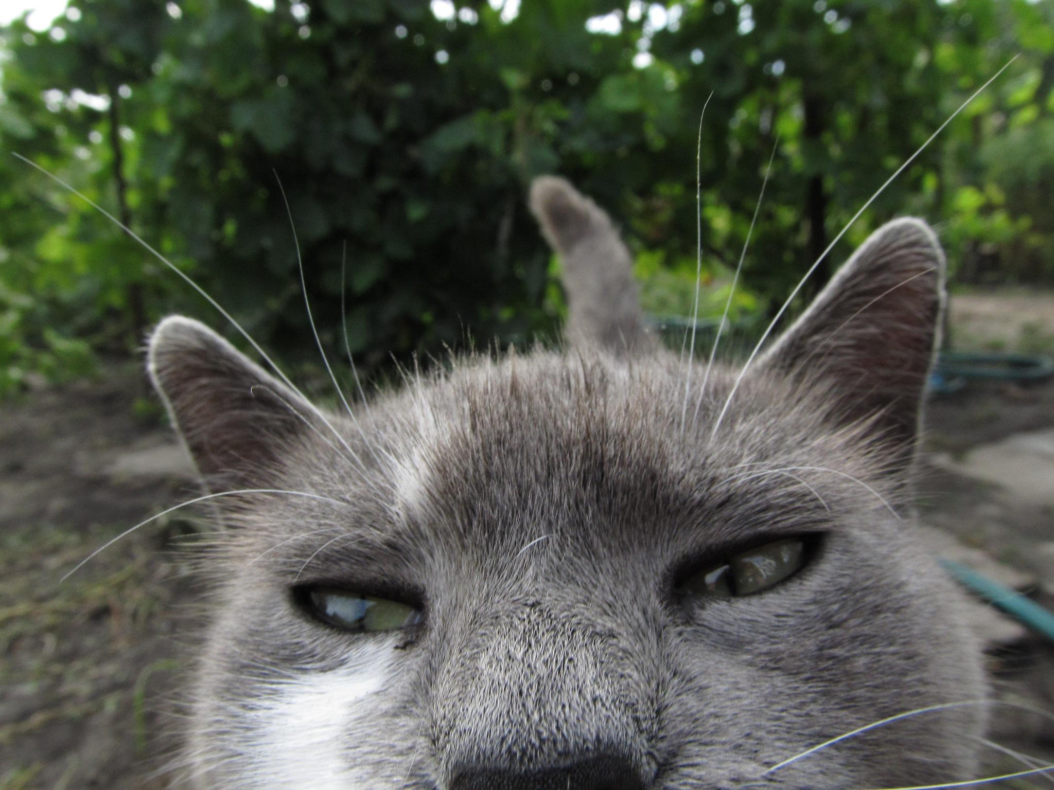 ~ Cat ~ by Michael Krivoshey