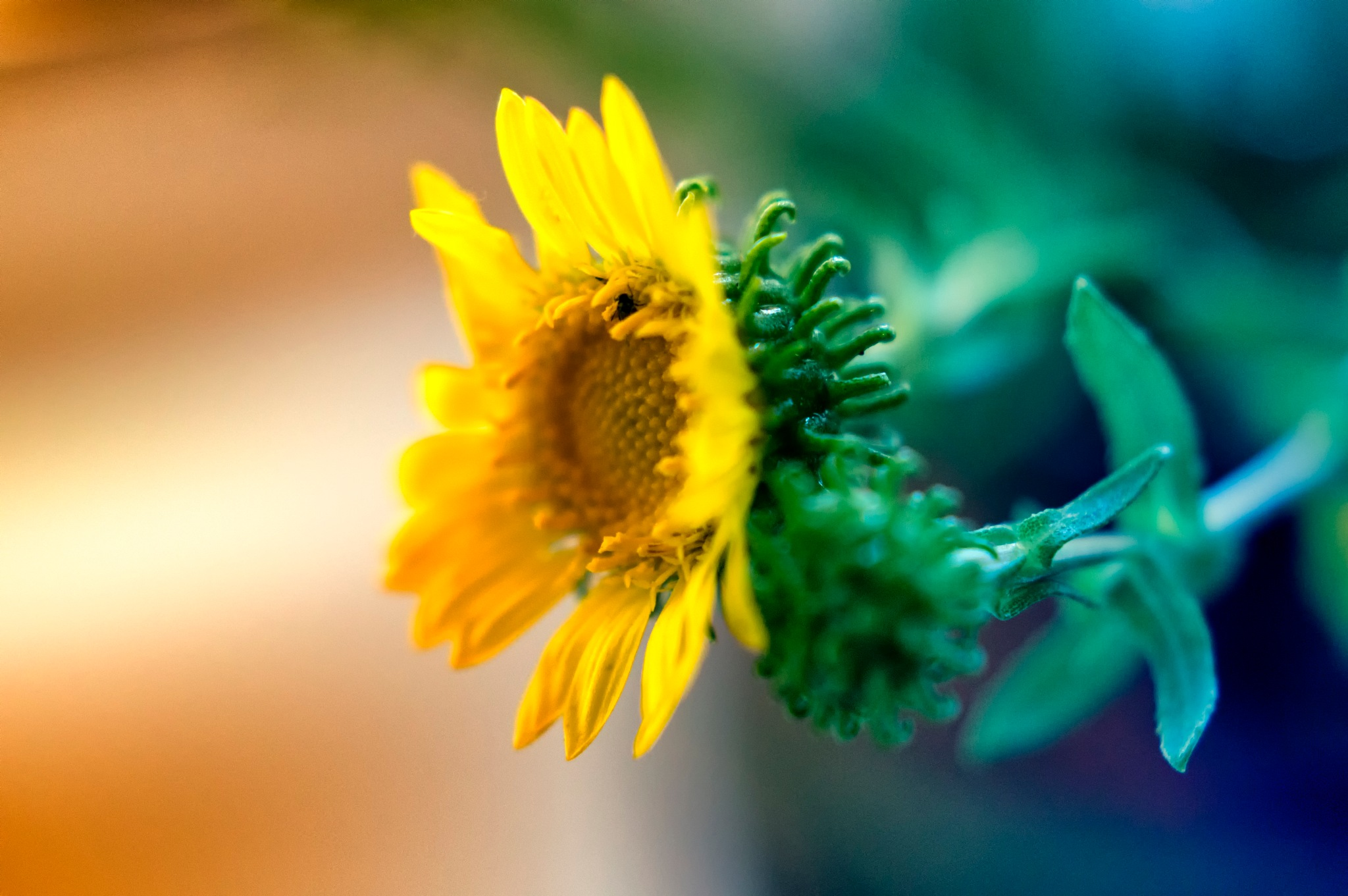 ~ Flower ~ by Michael Krivoshey