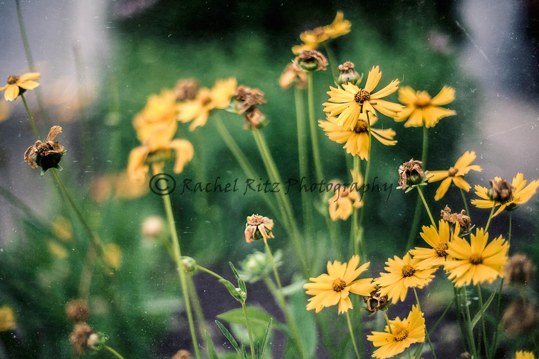 Yellow flowers by Rachel