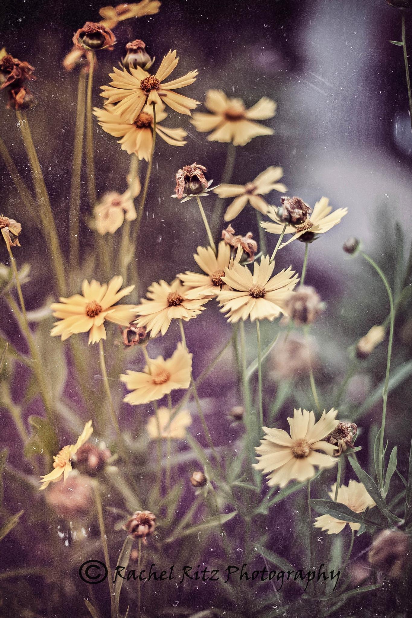 Vintage Flowers by Rachel