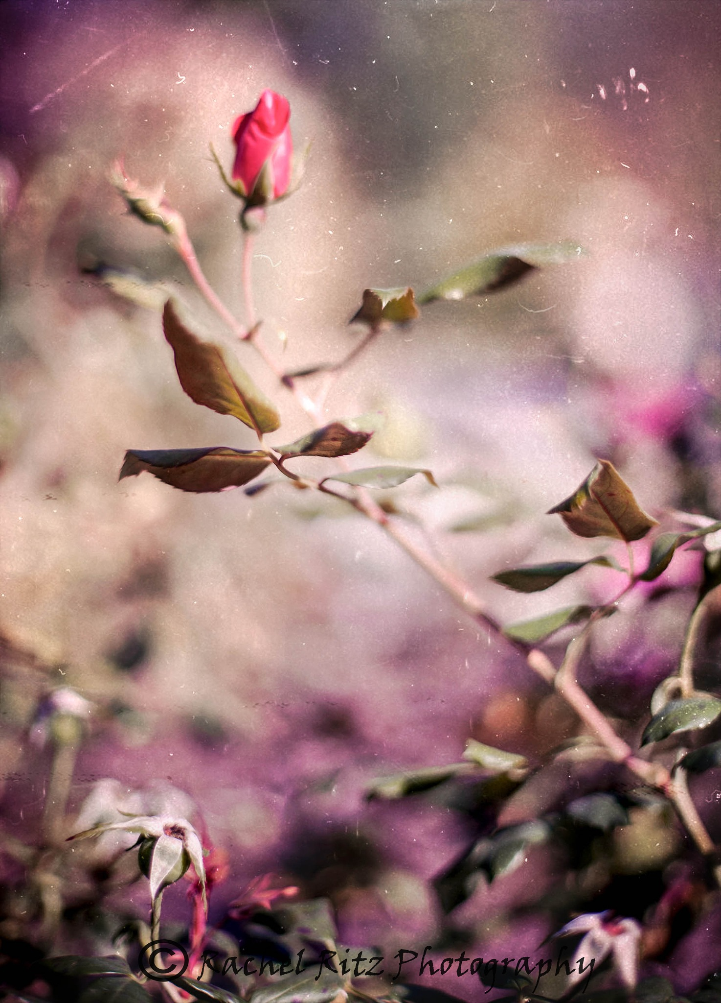 Flower Bud by Rachel