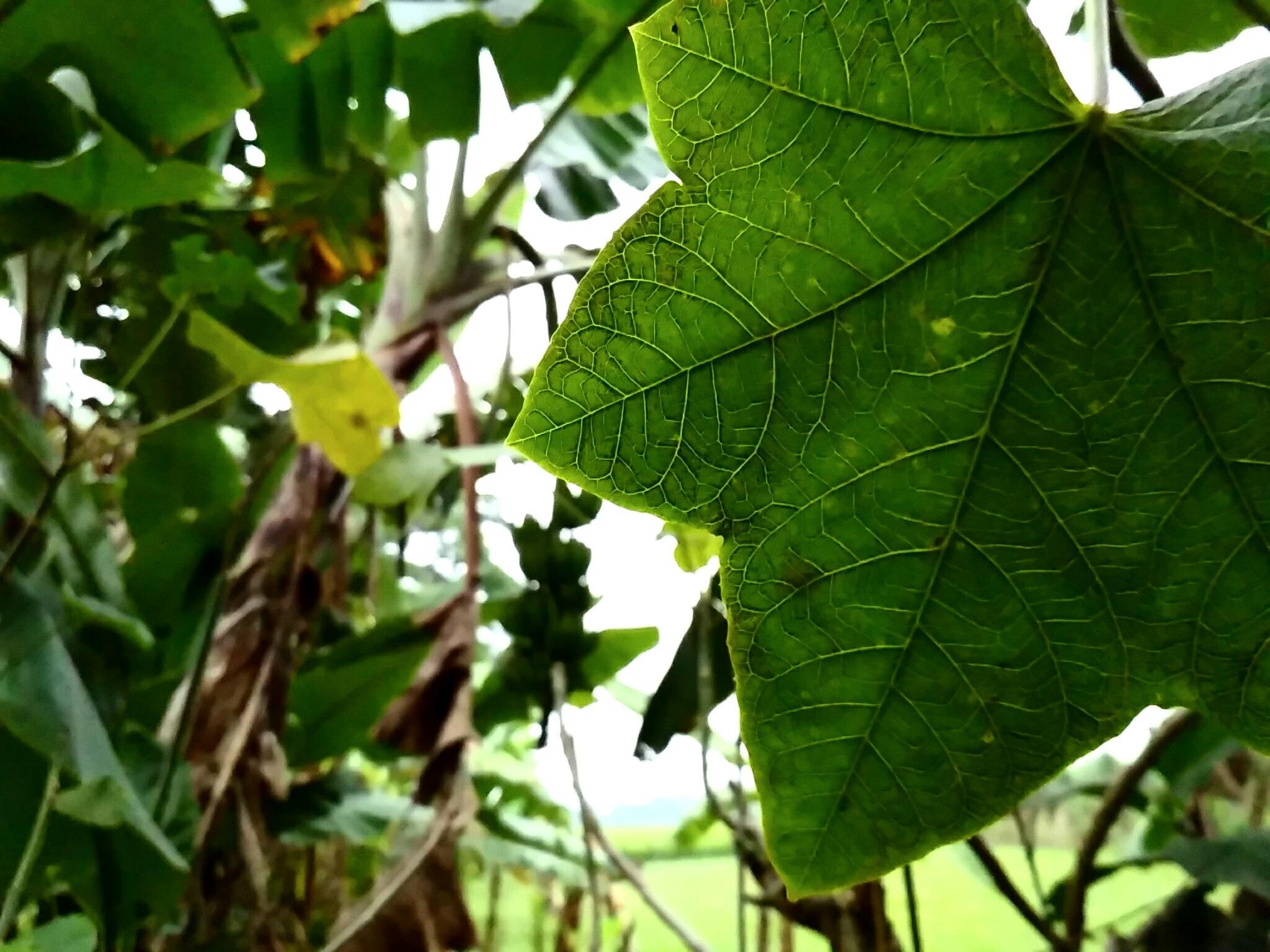 leaf by Polok Das