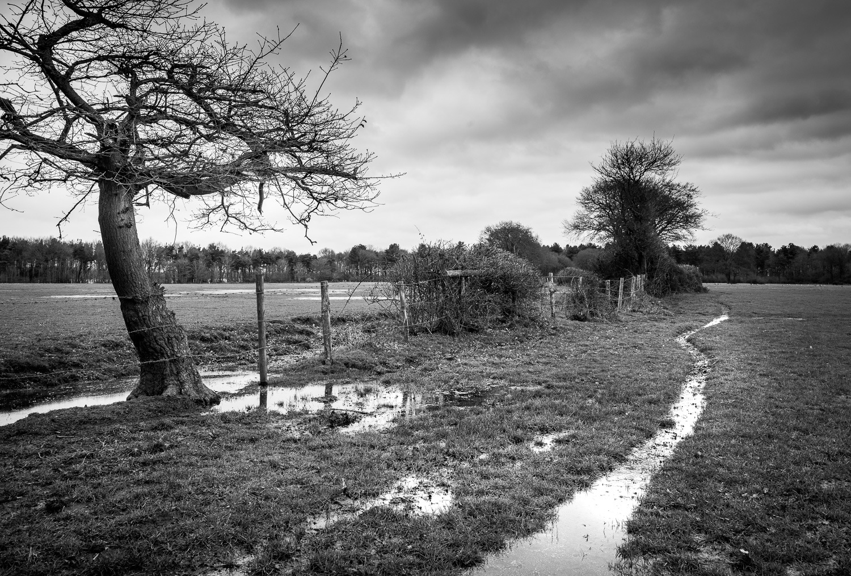 Wet fields by Nick Ward