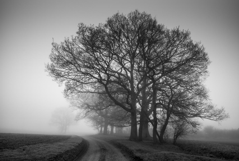 Misty road by Nick Ward
